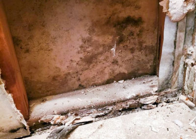 Removing mold within a wall.