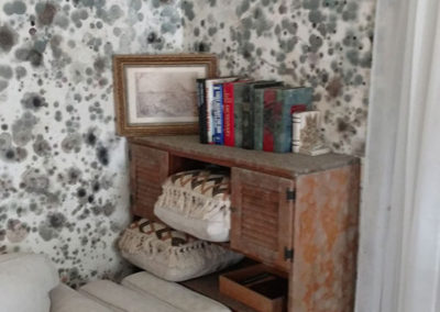 """Mold """"taking over"""" a living area. If not dealt with, mold can spread rapidly."""