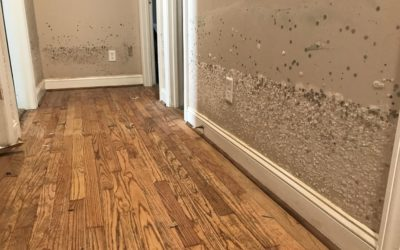 Don't Let Water Damage Turn into Mold Damage
